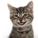 Why Do Cats Chatter Their Teeths?