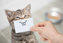 Kitten Teething: Things you need to know