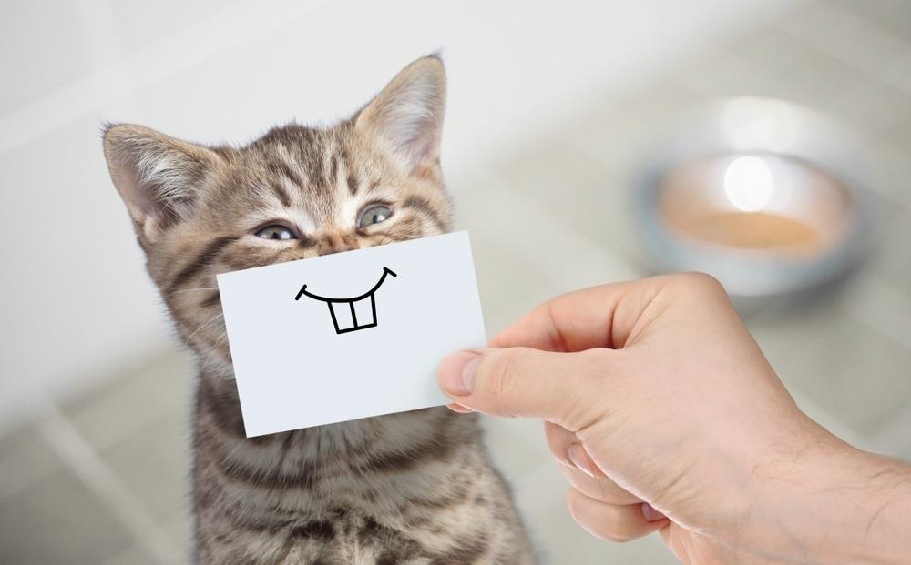 kitten teeths