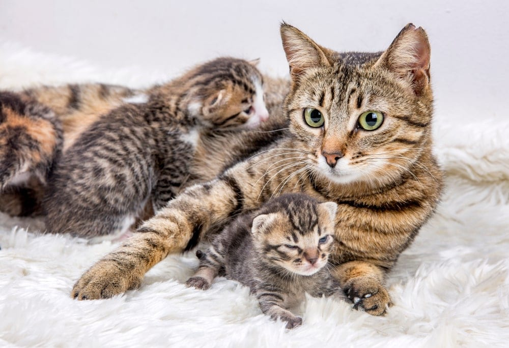 kittens with mother cat