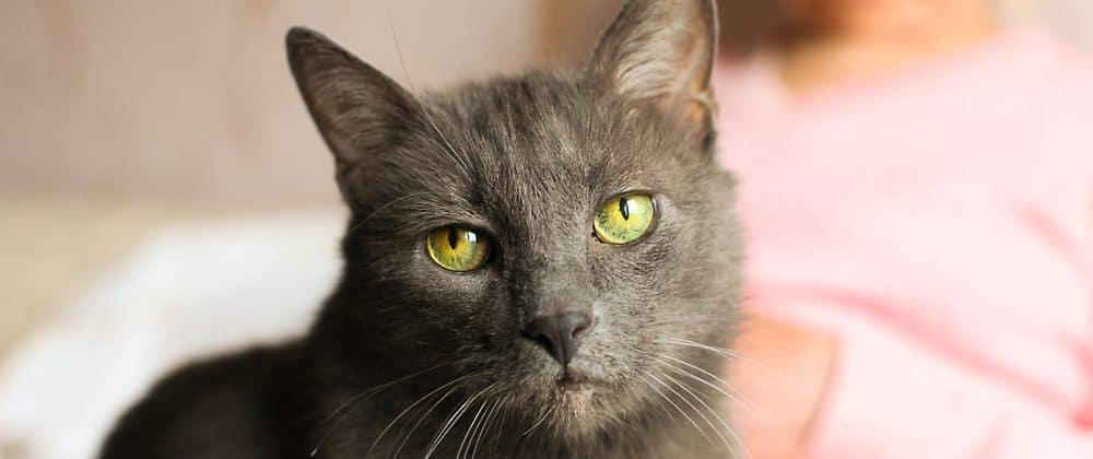 old cat 1 e1578070399312