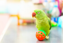 How Smart Are Parakeets?