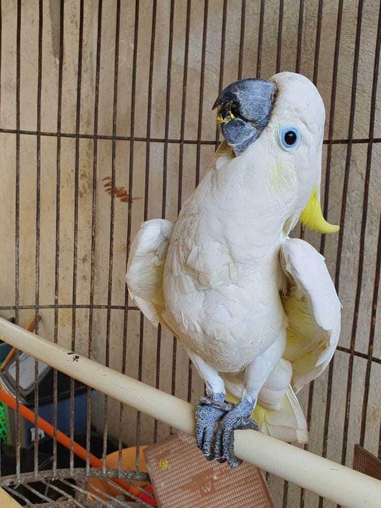 parrot dance