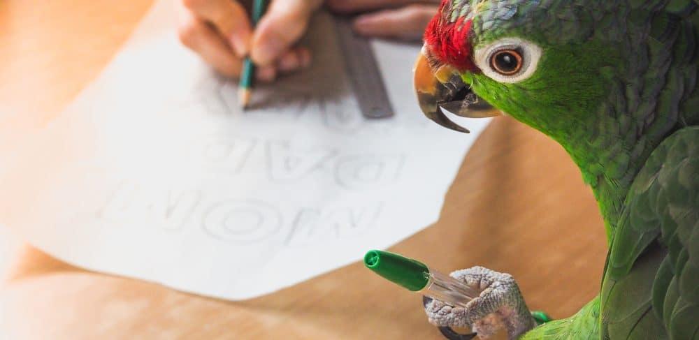 parrot helps write 1 e1579289626212