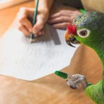 Parrots as Service Animals – Information
