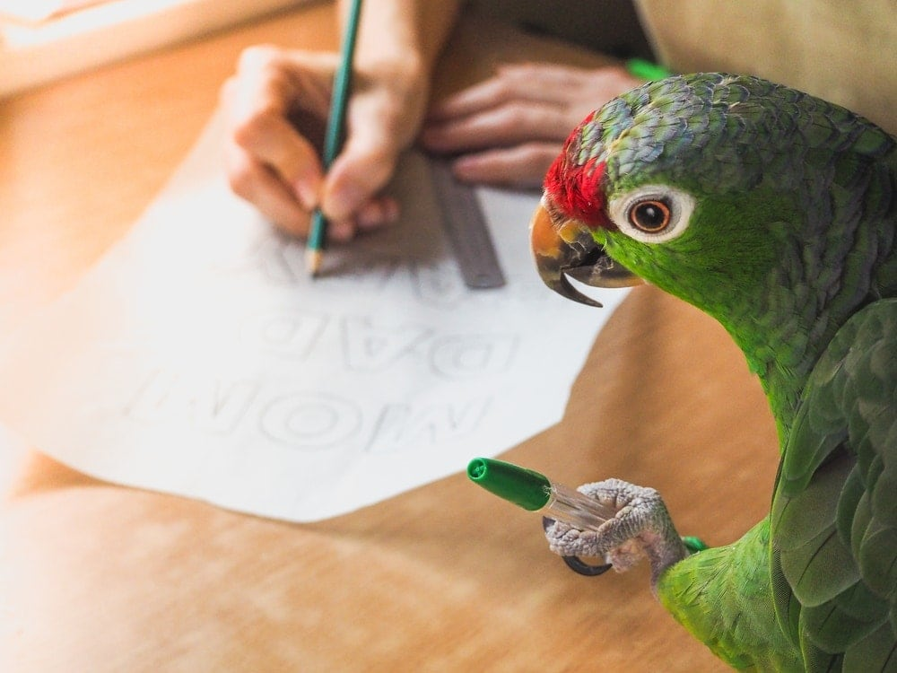parrot helps write
