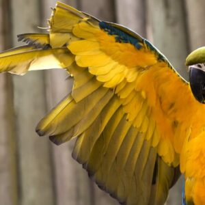 Should I clip my bird's wings?