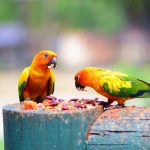 Pet Bird Food Guide & Info
