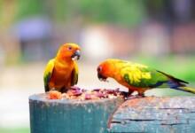 Pet Bird Food Guide & Info