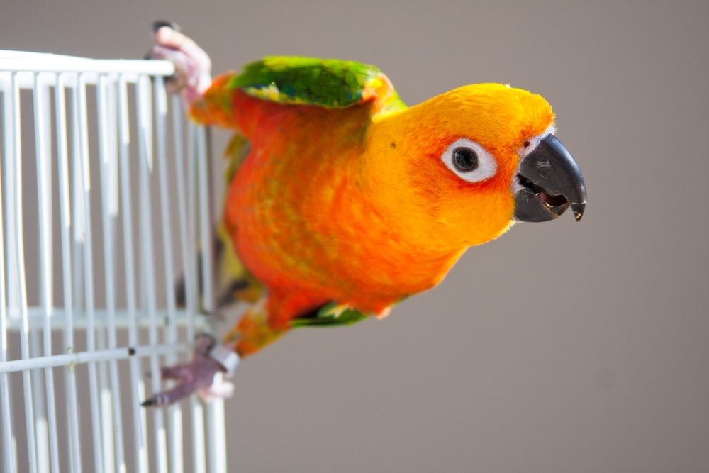 pet bird cage