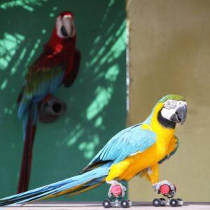 5 Cool Tricks to Teach Your Pet Bird