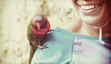 pet bird on shoulder