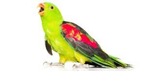 pet bird talk e1579439043316