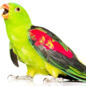 8 Small & Medium Pet Birds That Can Talk