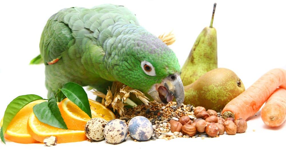 pet bird vegetables 1 e1580067723338