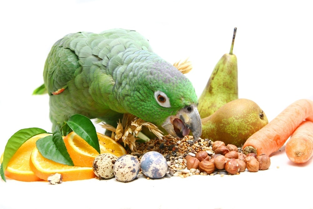 pet bird vegetables