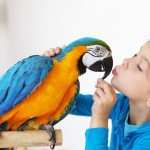11 Best Pet Birds for Beginners