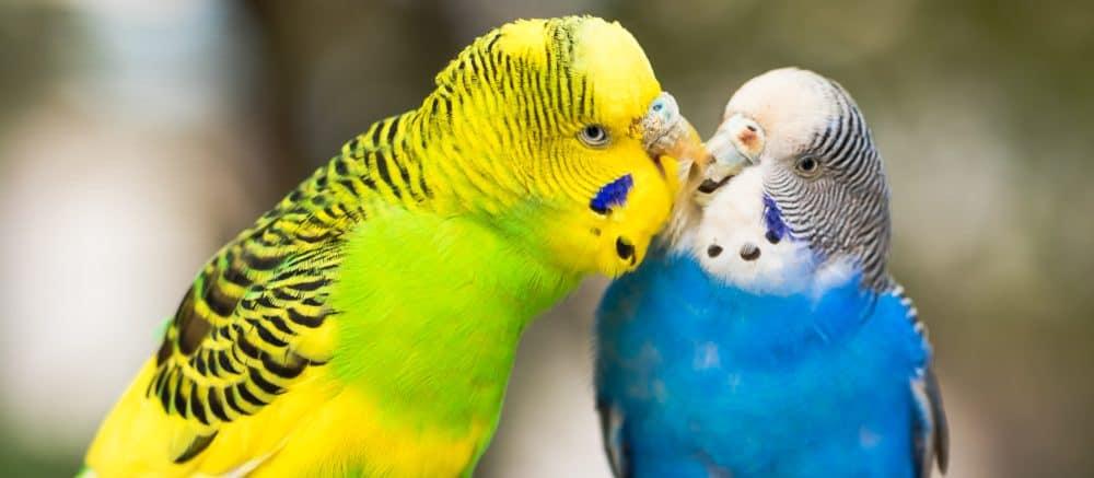 pet birds 3 e1579801562403