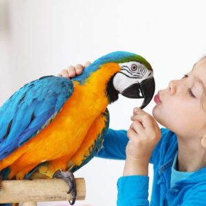 11 Best Pet Birds for Beginners