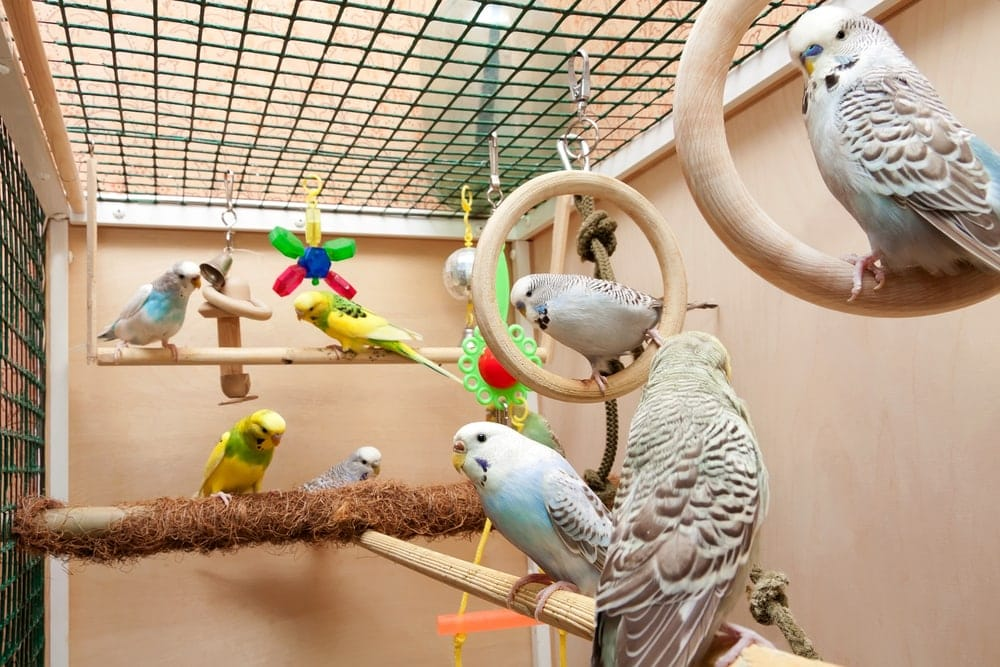 pet birds in cage