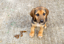 Why Won't my Puppy Poop Outside?