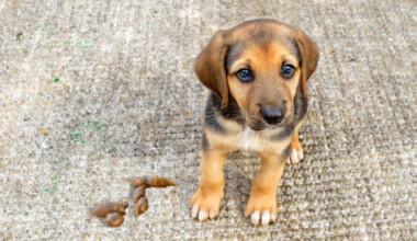 proud puppy poop