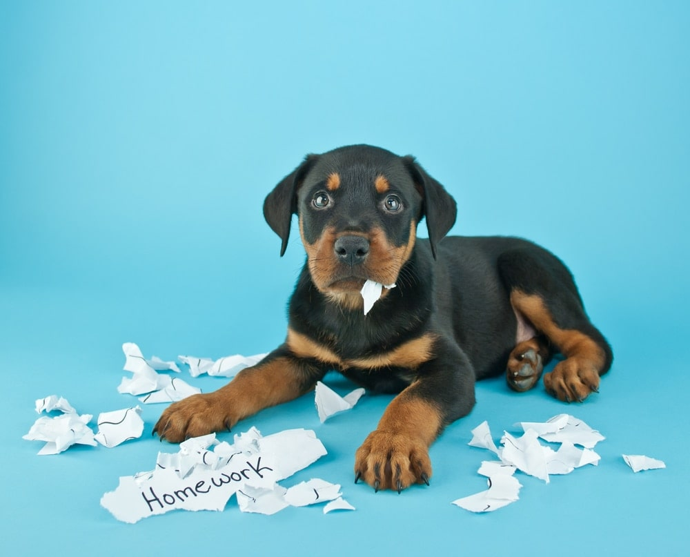 puppy eat paper