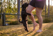 What Does it Mean When a Puppy Humps?