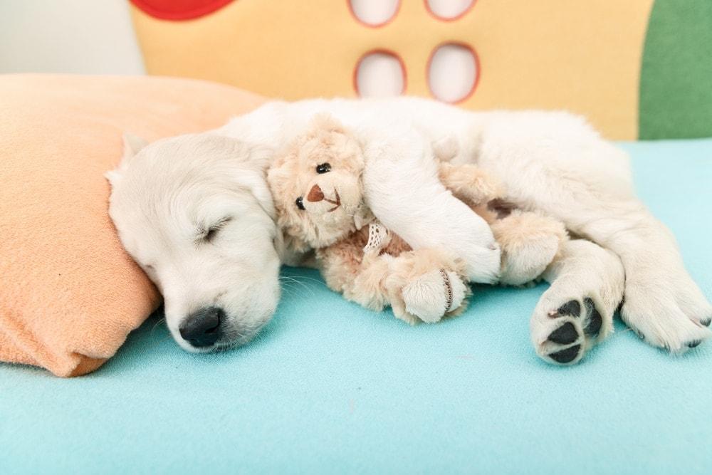 puppy sleep