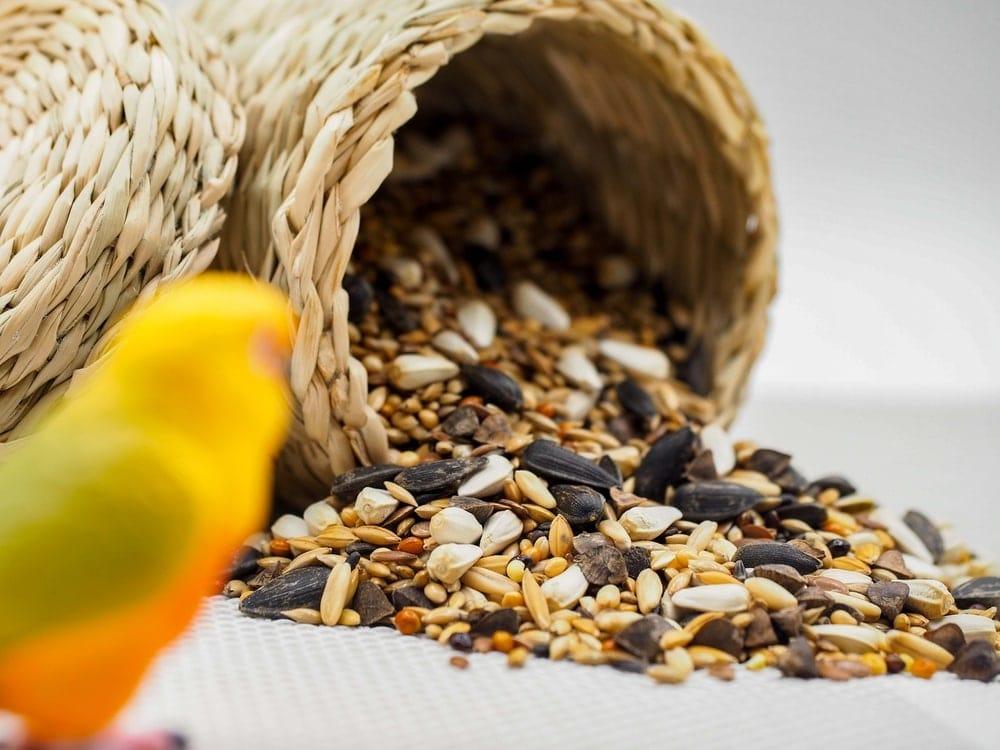 seeds bird food