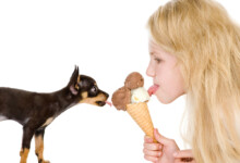 Can You Give a Puppy Ice Cream?