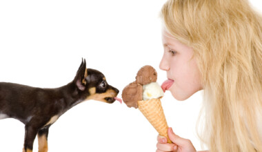 sharing ice cream puppy