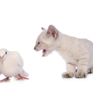 Can Cats and Birds Talk to Each Other?