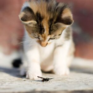 Is it Safe for Cats to Eat Bugs & Insects?