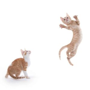 How Can Cats Jump so High?