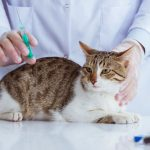7 Most Common Cat Health Problems