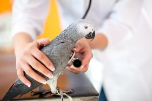 sick parrot at hospital