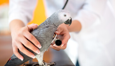 sick parrot getting medical help