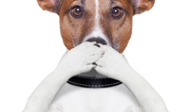 silent dog