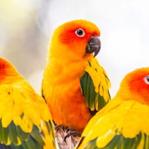 Most Colorful Parrot Species
