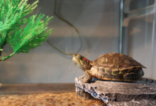 Turtle Tank - Set Up & Maintenance