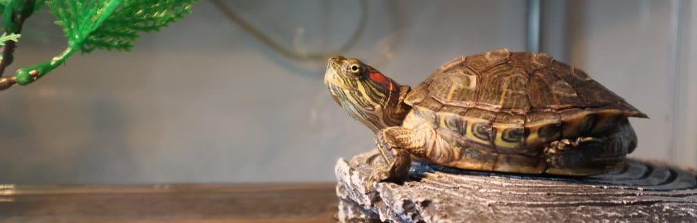 turtle tank happy turtle e1580470720605