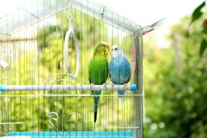 two birds in cage
