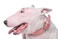 Why Your Dog Has Crusty Scabs on His Back & Neck