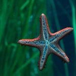 What Do Starfish Really Eat?