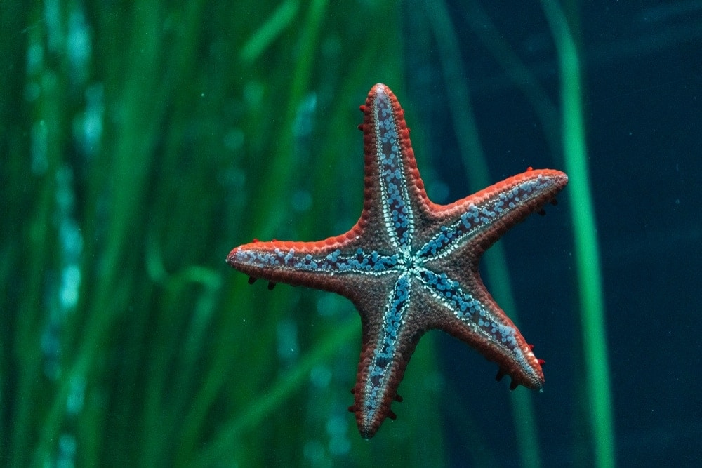 Starfish chilling waiting for the food