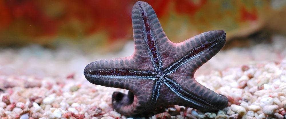 Starfish in an aquarium e1580933490382