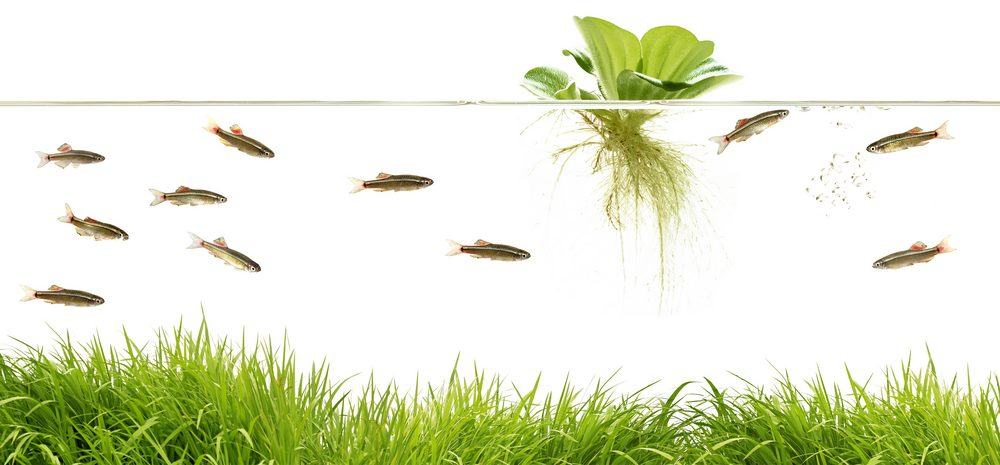 aquarium with floating plant 1 e1580999778451