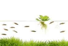 Benefits of Having Floating Aquarium Plants