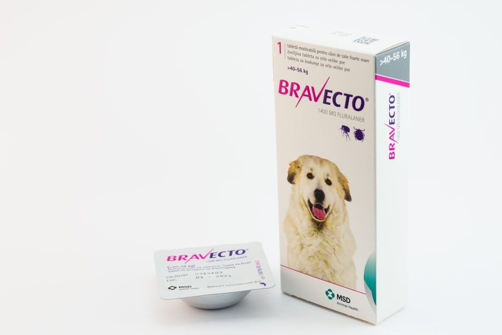 bravecto for dogs isolated